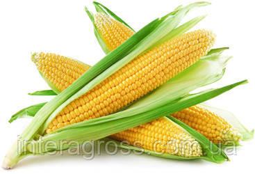 Семена кукурузы Корнади