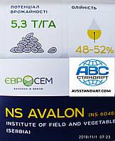 Топ Продаж. Семена подсолнечника Авалон Оптимум НС 6046. Гибрид Авалон устойчив к засухе и заразихе A-G, 55ц/га, 52% олии.  Масса тысячи 50-57 грамм