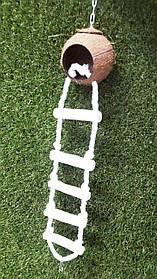 Игрушка для попугая Кокос с лесенкой