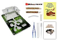 Мини Муравьиная Ферма с ареною VinniAnts «Листья Папоротника» + Колония муравьев + 2 вида корма