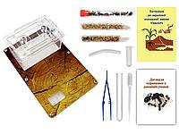 Мини Муравьиная Ферма с ареною VinniAnts «Эко-дерево» + Колония муравьев + 2 вида корма