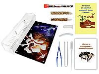 Муравьиная Ферма VinniAnts «Star Wars» + Колония муравьев + 2 вида корма