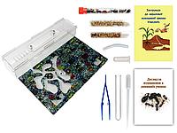 Муравьиная Ферма VinniAnts «Граффити» + Колония муравьев + 2 вида корма