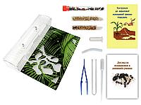 Муравьиная Ферма VinniAnts «Листья Папоротника» + Колония муравьев + 2 вида корма