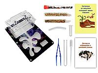 Мини Муравьиная Ферма с ареною VinniAnts «Инновация» + Колония муравьев + 2 вида корма