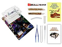 Мини Муравьиная Ферма с ареною VinniAnts «Комиксы Marvel / DC» + Колония муравьев + 2 вида корма