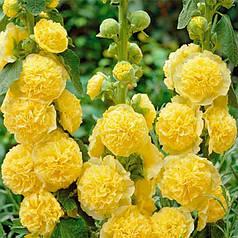 Семена Мальва Шатер желтая 0,3 г W.Legutko 5093