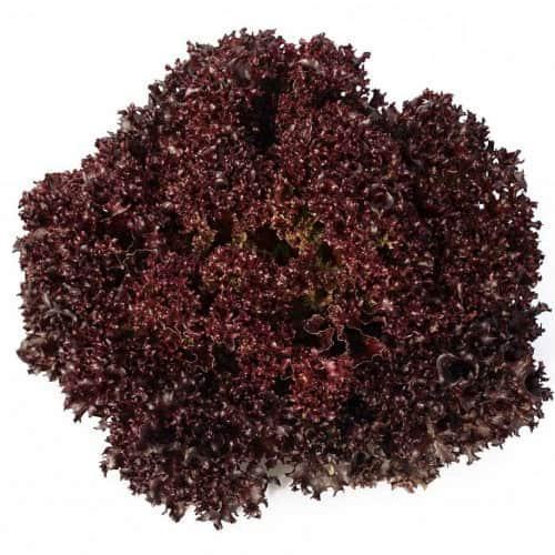 Профессиональные Семена красного салата Кармеси, 5000 семян (драже), Seeds rijk zwaan Голландия