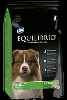 Equilibrio для средних пород собак