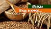Украина среди мировой тройки лидеров по экспорту зерна