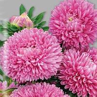 Семена астры Балун розовая, 1 г  Satimex