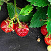 """Агроволокно черное Т.М. """"Shadow"""" 50 г/м² 1,6 х 100м. 4%, фото 4"""