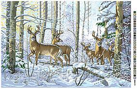 Картинка для вишивки нитками на канві (А2-16-005)