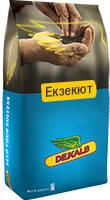 Озимый рапс ДК ЕКСВИЗИТ, Высокоурожайный 5,2-5,6 т/га, Зимостойкий, Среднепоздний. Dekalb / Monsanto