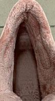 Кроссовки женские евро зима 8 пар в ящике розового цвета 36-41, фото 3