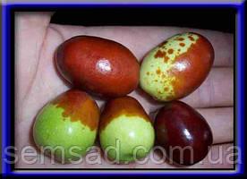Саженцы Плодово-ягодных