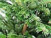 Ялинка Nordmanniana 2.00 - 2.50 м Gold, фото 2