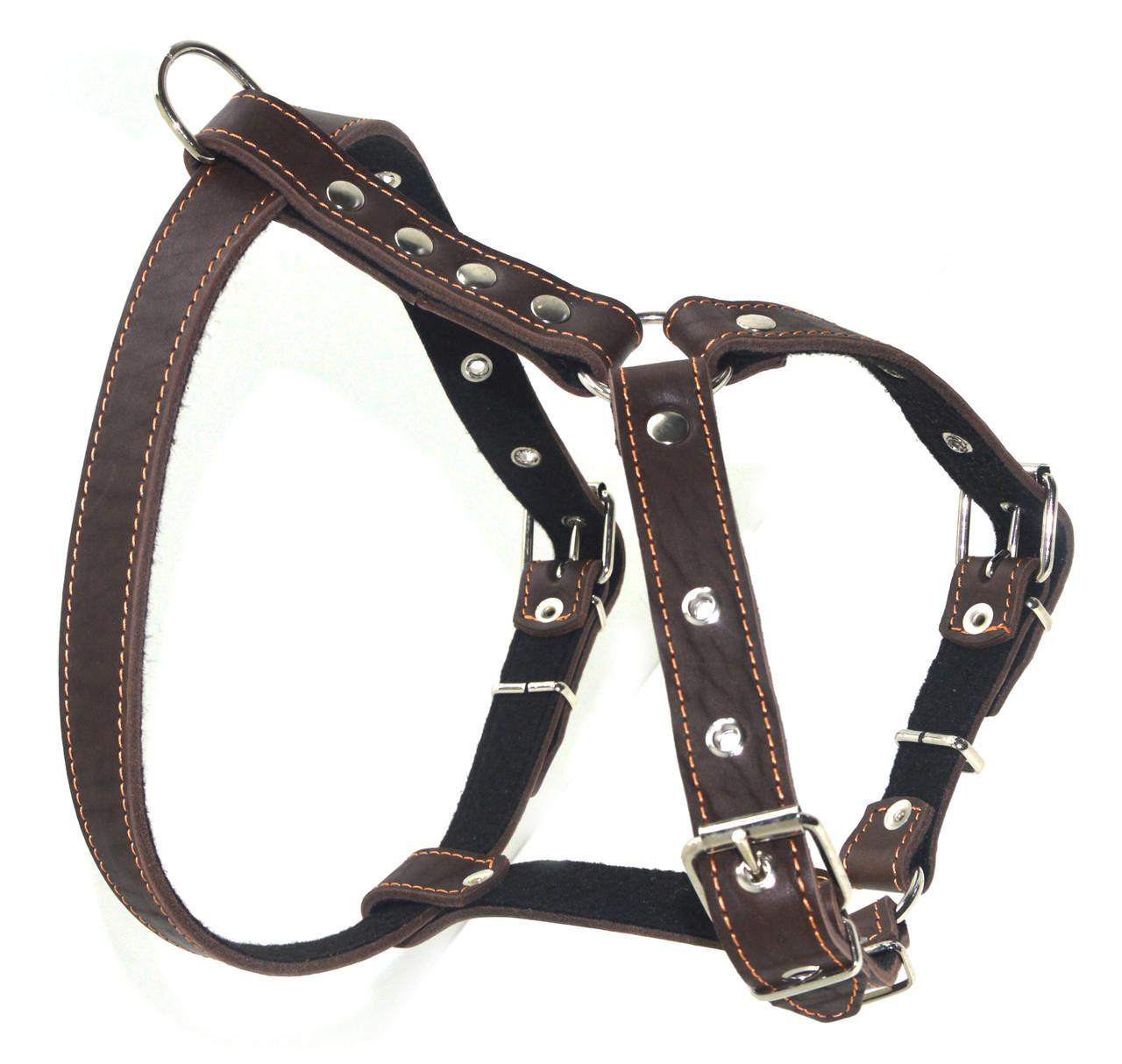 Шлея нагрудник для собак кожаная Стаффорд 1 коричневая