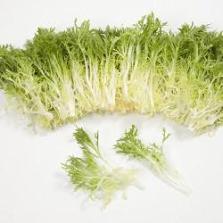 Семена салата Корби, 1000 семян (драже), Rijk Zwaan