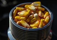Как правильно расчитать урожайность кукурузы?
