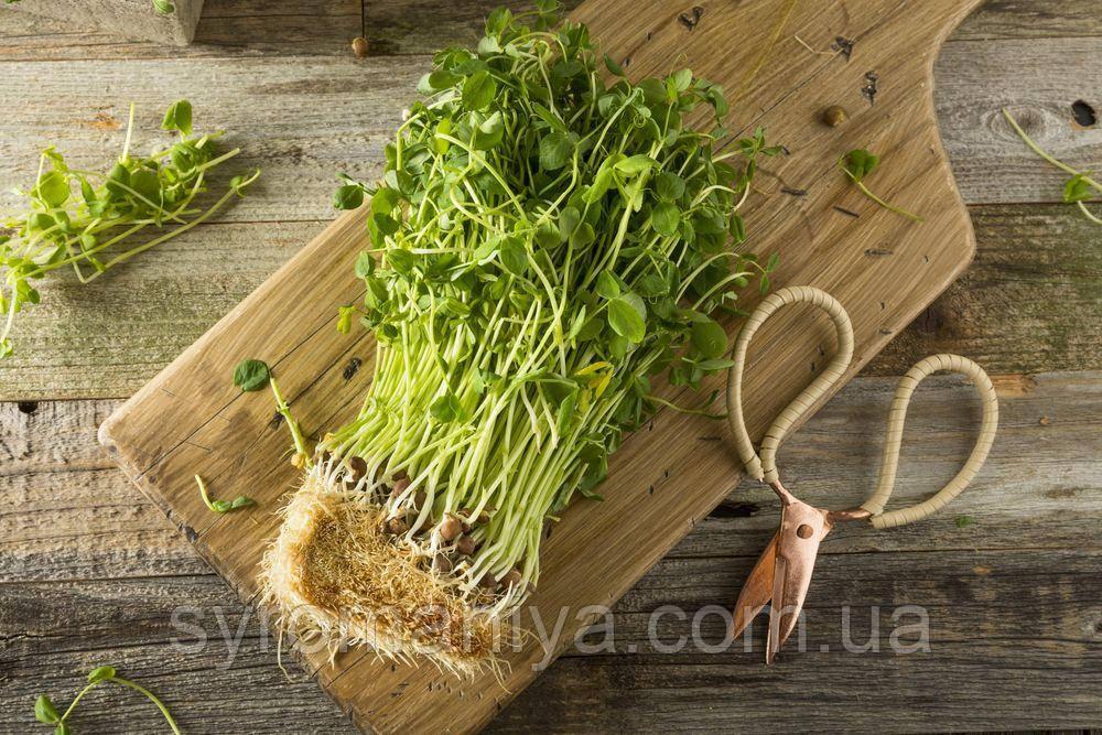 Набор для выращивания микрозелени гороха