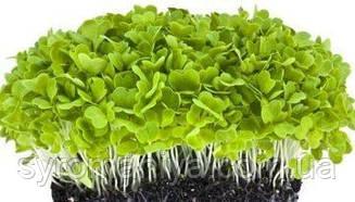 Набор для выращивания микрозелени базилик