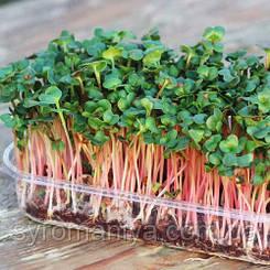 Набор для выращивания микрозелени рукколы