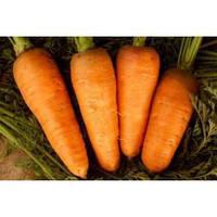 Семена моркови Болтекс 5 кг