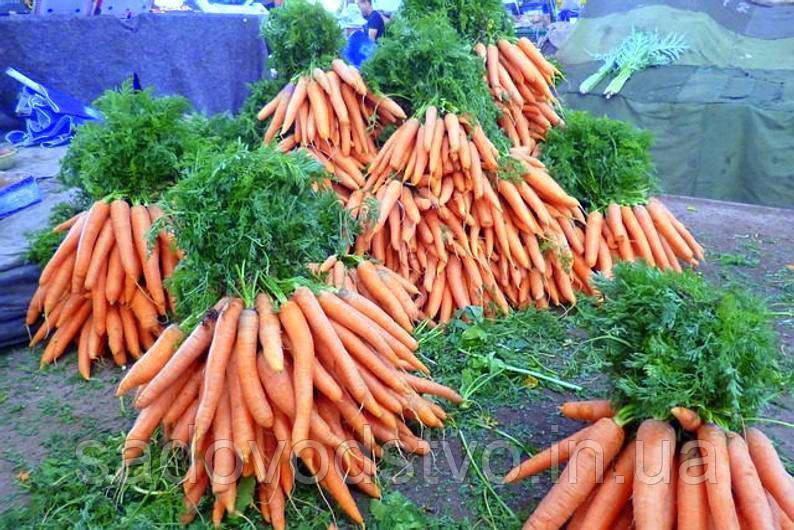 Морковь Сладкая нежная (Tendersweet)