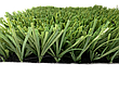 Stemgrass 40, фото 3