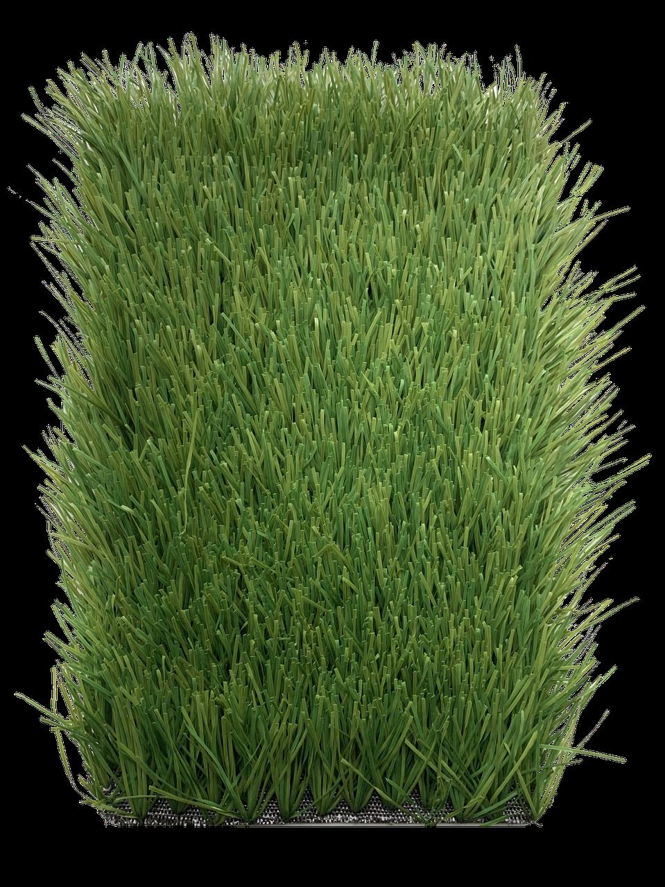 Stemgrass 60