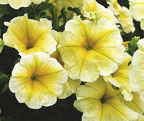 Семена Петуния ампельная крупноцвет Лавина Желтая звезда F1 20 сем Cerny 5123, фото 2
