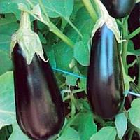 Семена баклажана Шарапова F1, 1000 семян, Rijk Zwaan, фото 1