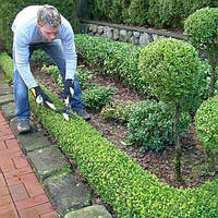 Услуги садовода в Луганской области. Реанимация сада с гарантией хорошего результата.