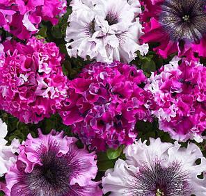 Семена Петуния гибридная великолепная Черныго триумф 20 сем Cerny 5132, фото 2