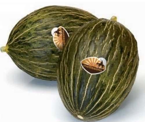 Среднеспелый гибрид дыни Рикура F1, профупаковка 1000 семян, Голландия Rijk zwaan семена Рийк цваан