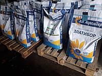 Семена подсолнечника Златибор A-G