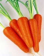 Семена моркови сорт Абако F1 SM, 200000 шт