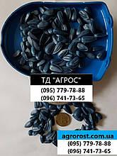 Насіння соняшнику ЯСОН, Ціна на врожайний ЯСОН Фракція 3,0-3,25 в Україні. Агроспецпроект