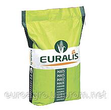 Насіння кукурудзи - ЕС КОНКОРД (2019 р)