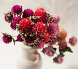 Сухоцветы для эпоксидной смолы, Гомфрена, 4 цвета, фото 5