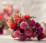 Сухоцветы для эпоксидной смолы, Гомфрена, 4 цвета, фото 2