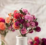 Сухоцветы для эпоксидной смолы, Гомфрена, 4 цвета, фото 7