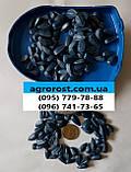 Подсолнечник ФОРВАРД, Высокоурожайный, Масличный, Стандарт Фракция 2,6-2,8., фото 2