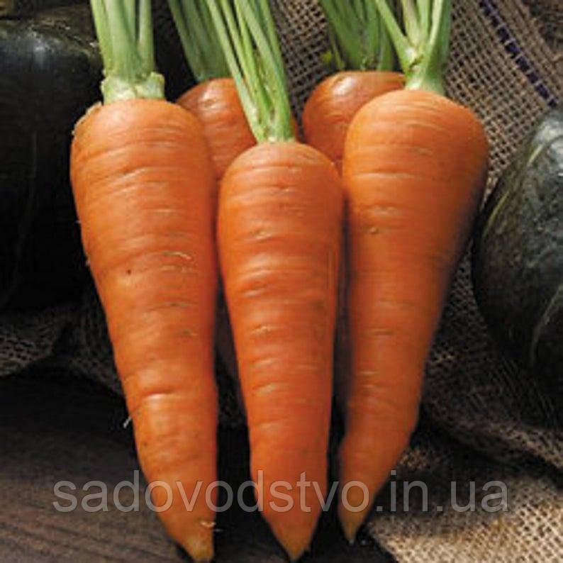 Морковь Денверз (Danvers)