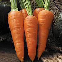 Морковь Денверз (Danvers), фото 1