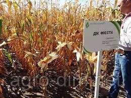 Насіння кукурудзи ДН Фієста