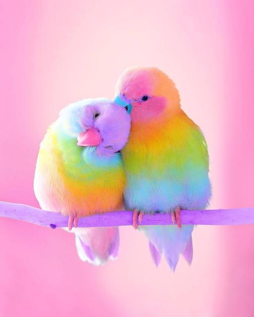 Товари для птахів
