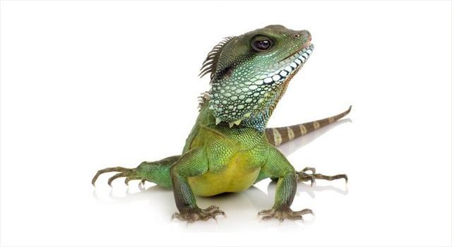 Товари для рептилій