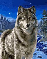 Раскраска по цифрам Волк в зимнем лесу (VP467) 40 х 50 см